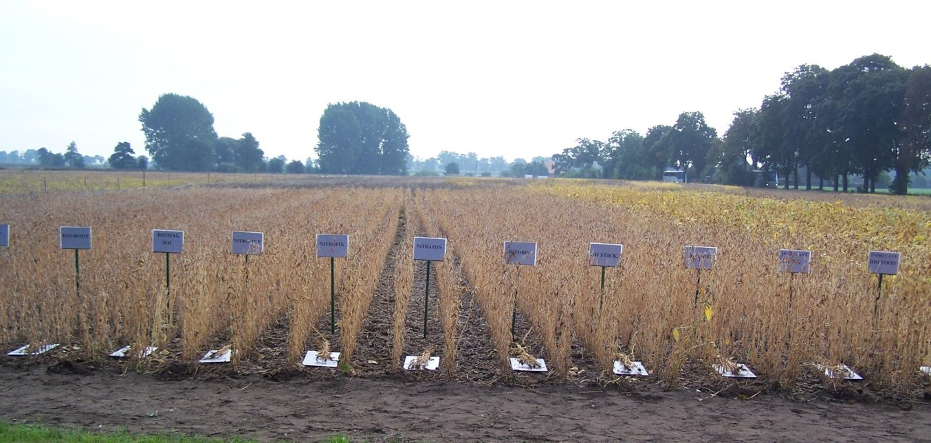 Tarp baltyminių augalų populiarėja sojos