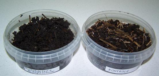Organinių liekanų skaidymas bakterijų pagalba